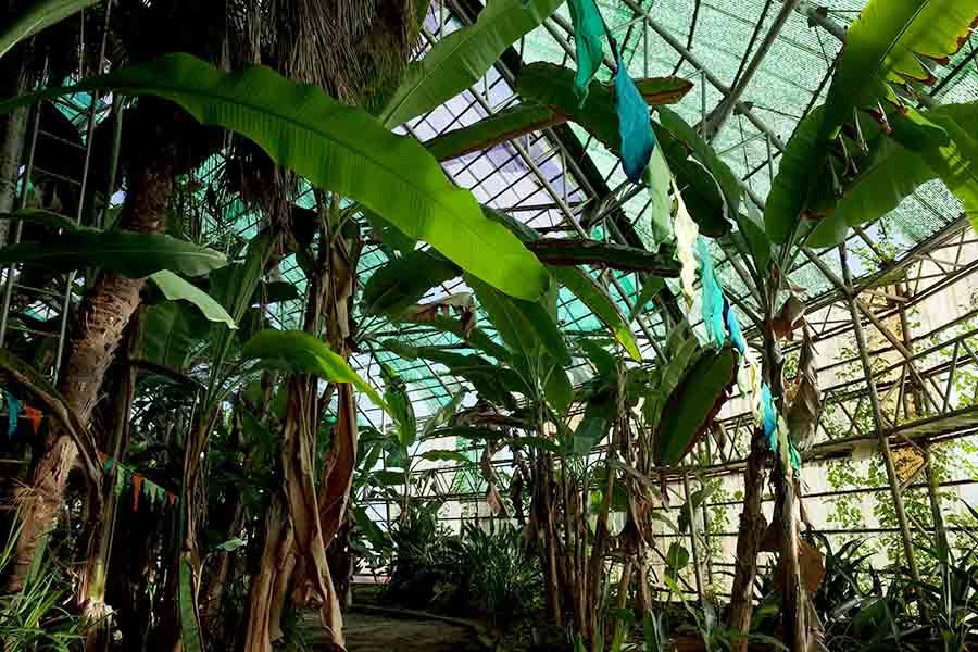 温室 熱帯植物
